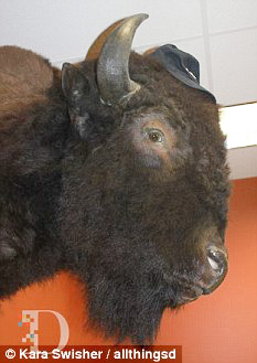 """Billy"" the bison killed by Zuckerberg"