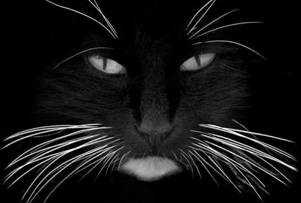 Black cat with white whiskers