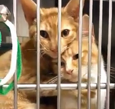 Cat friendship in a cage at a shelter