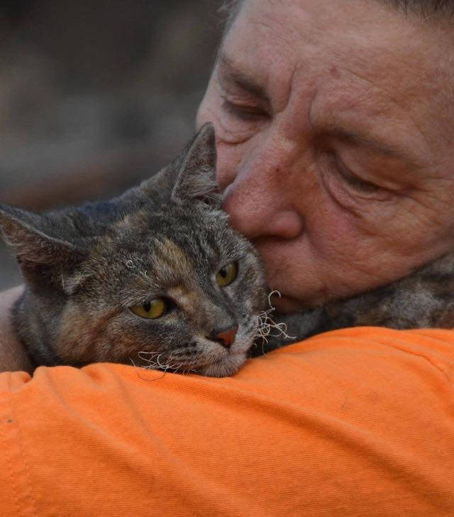Cat survives california fire