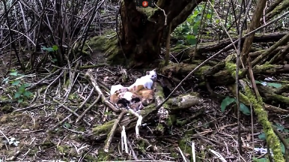 Cats abandoned in a wood