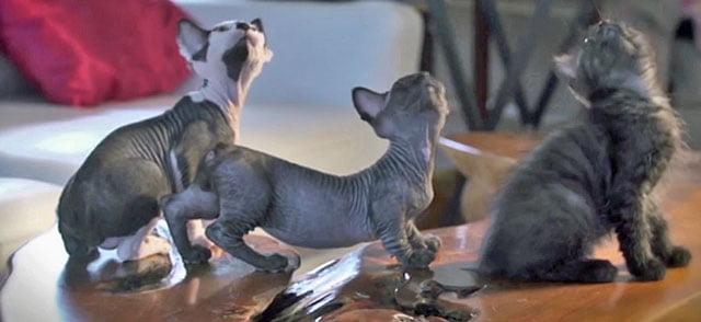New Cat Breeds