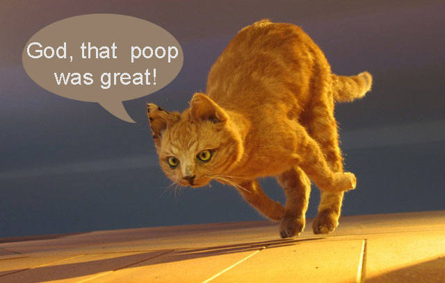 Cat poop excitment
