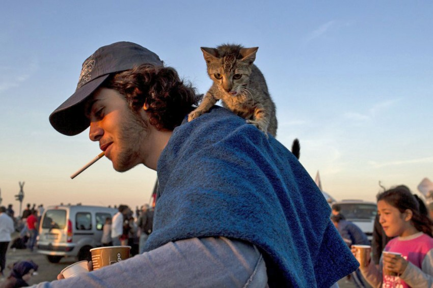 Refugee and cat