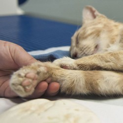 Moe, a cat, after euthanasia