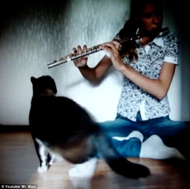 Cat attacks flute player