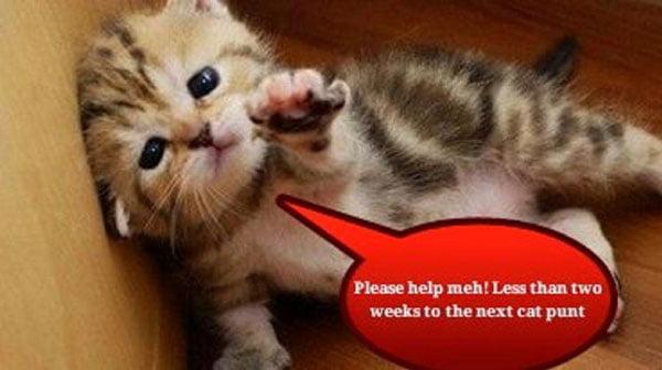 Cat Punting