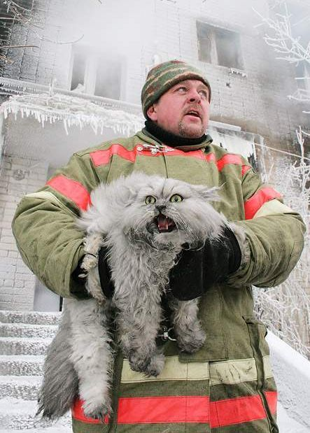 Fireman and yowling, gorgeous white cat