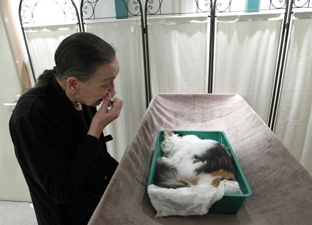 Human grieving on loss of cat