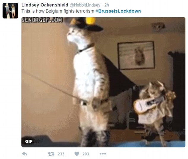 Belgians defiant in posting pictures of cats in face of terrorism