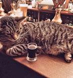 Cat Pub