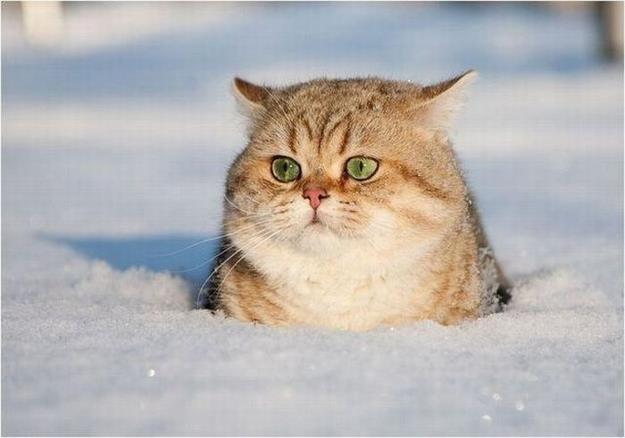 Cat cooling off in snow!