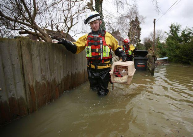 Cat saved in UK floods