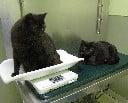 Cats at a veterinarian