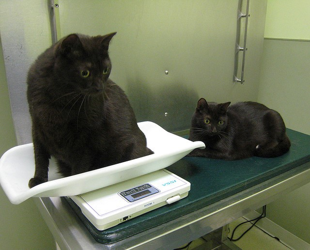 Cats at a veterinarian