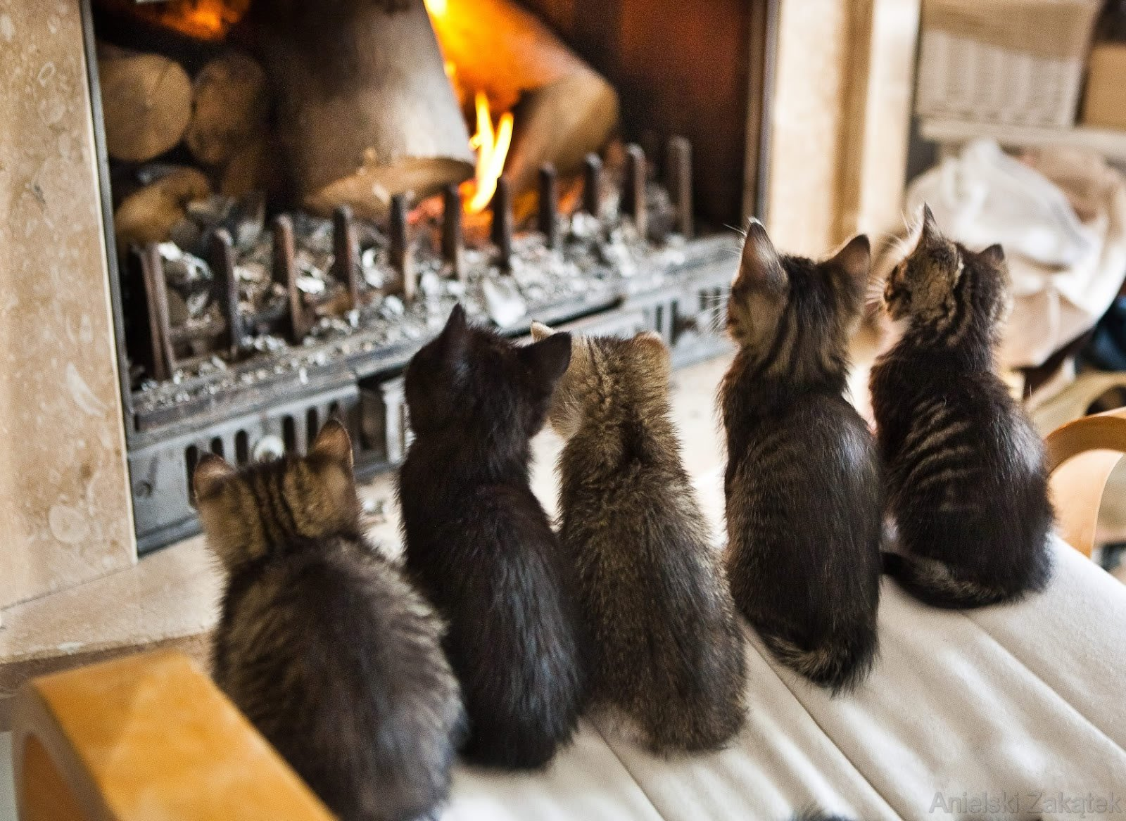 Cats at fireplace