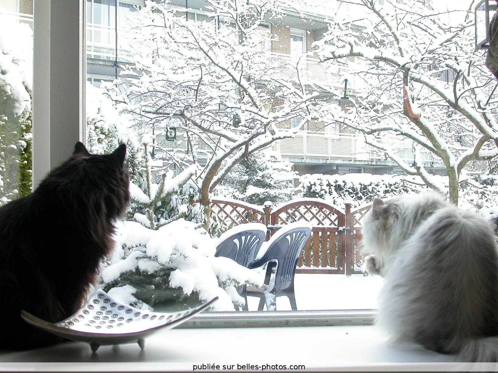 Cats looking out at snow