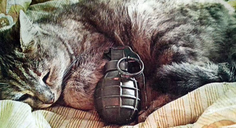 Islamist uses cats in sick and bizarre way to get recruits.