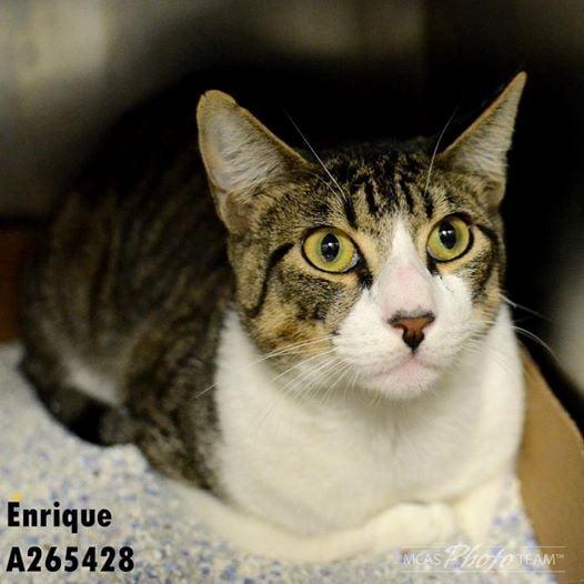 Enrique at shelter