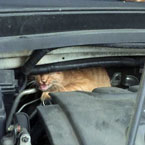Cat saved from under hood of car