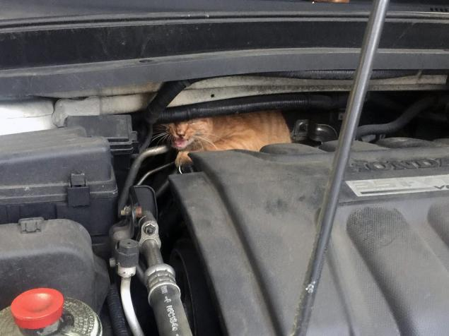 Ginger cat saved from engine compartment
