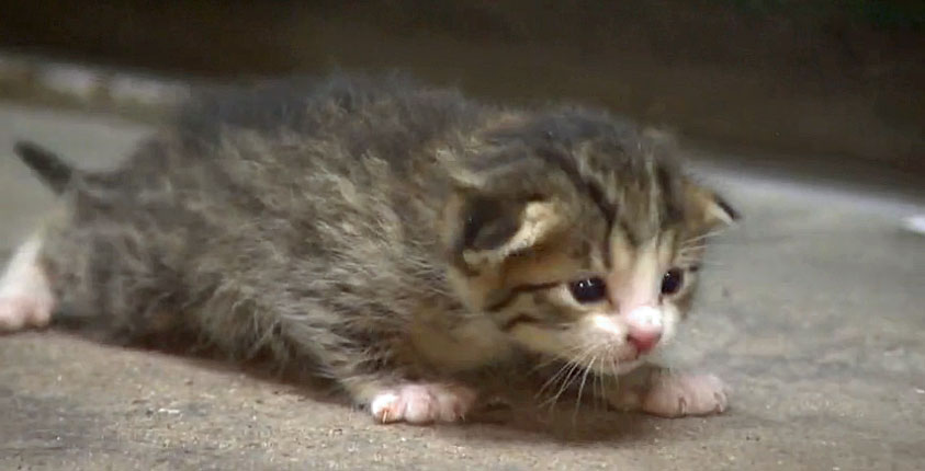Kitten saved from recycling plant