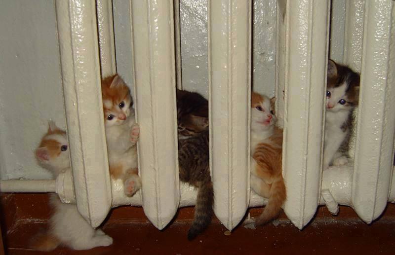 Kittens warm up inside radiator