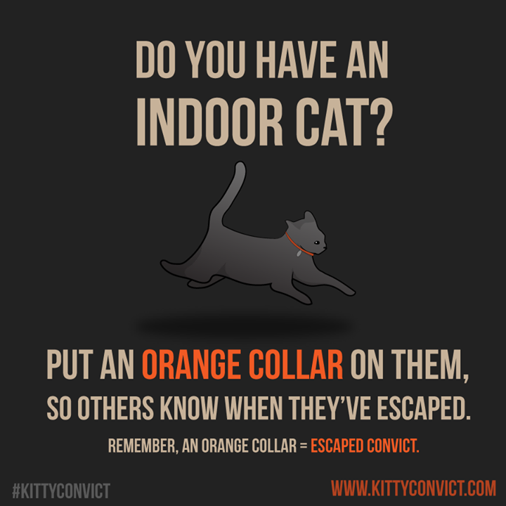 Orange collar for indoor cats