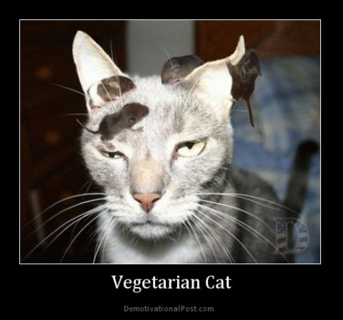Vegetarian cat. An amusing picture but this is a serious matter.