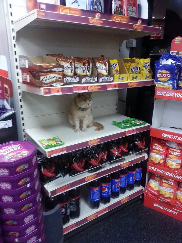 Ollie, a supermarket cat