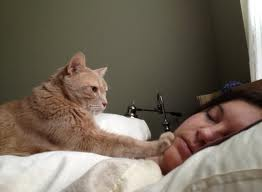 cat wakes up owner