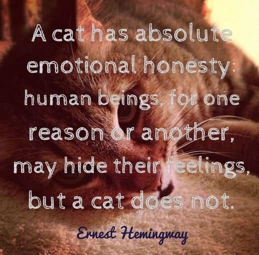 A cat has emotional honesty
