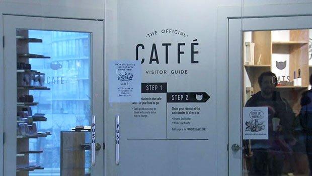 Catfe cat cafe