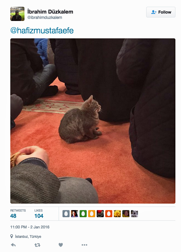Imam in Turkey loves cats