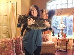 Maine Coon cat weighing twenty seven pounds