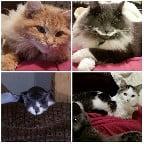 rescue cats