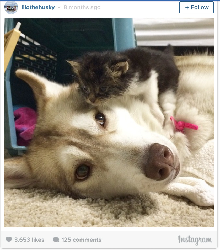 Rosie and Lilo -  cat raised by dogs
