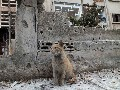 Syrian cat in war-torn country