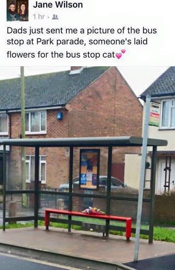 The bus stop with flowers on the bench