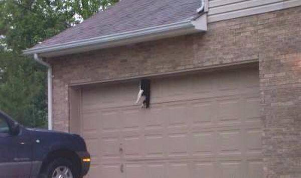 Powered Garage Doors Can Kill Cats Poc