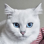 Cat with the beautiful eyes