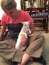 Holistic veterinary medicine