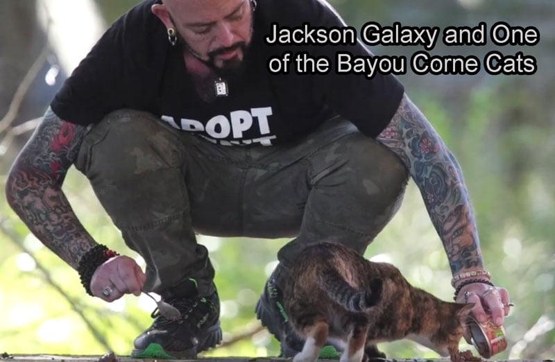 jackson and Bayou Corne Cat