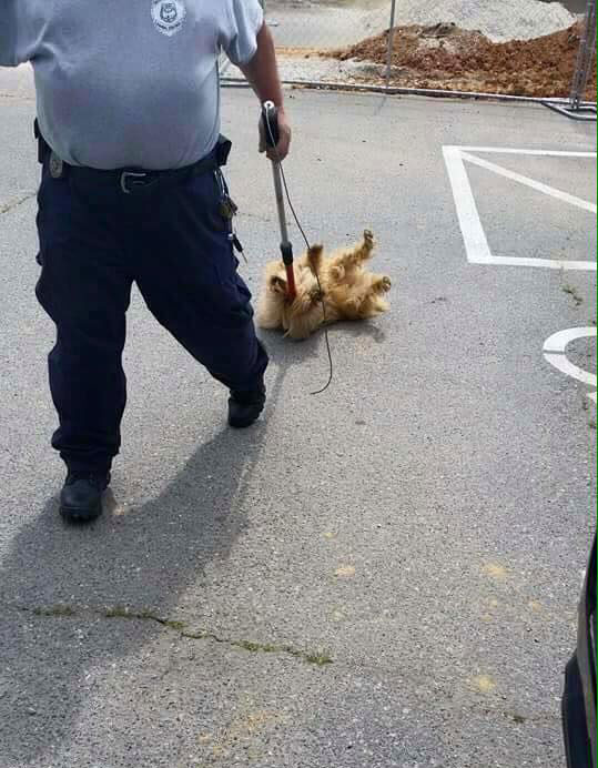 Rowan officer dragging dog