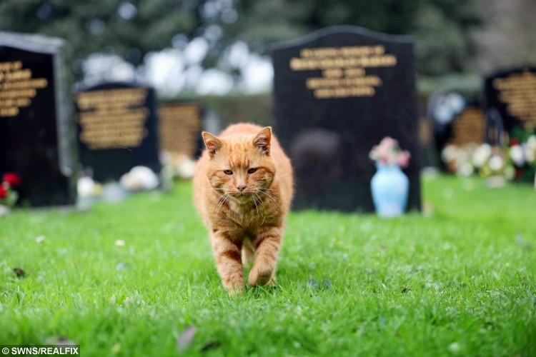 barney patrolling the cemetery