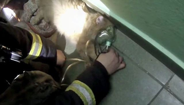 Cat revived with oxygen mask