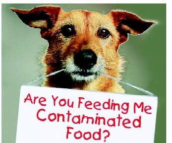 Feeding contaminated food to pets