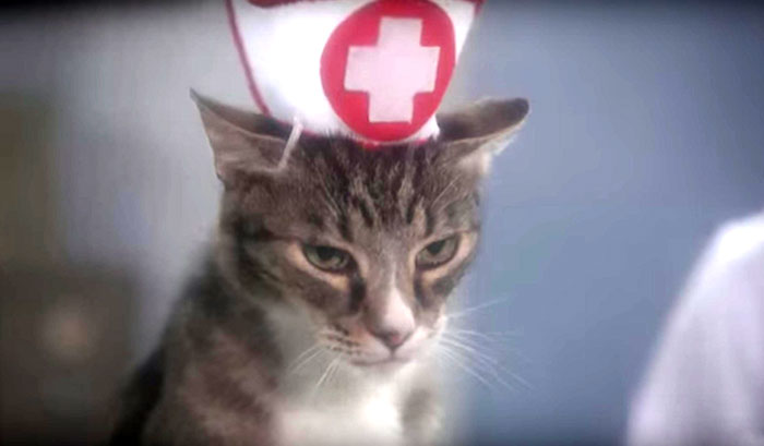 Cats Heart Mark