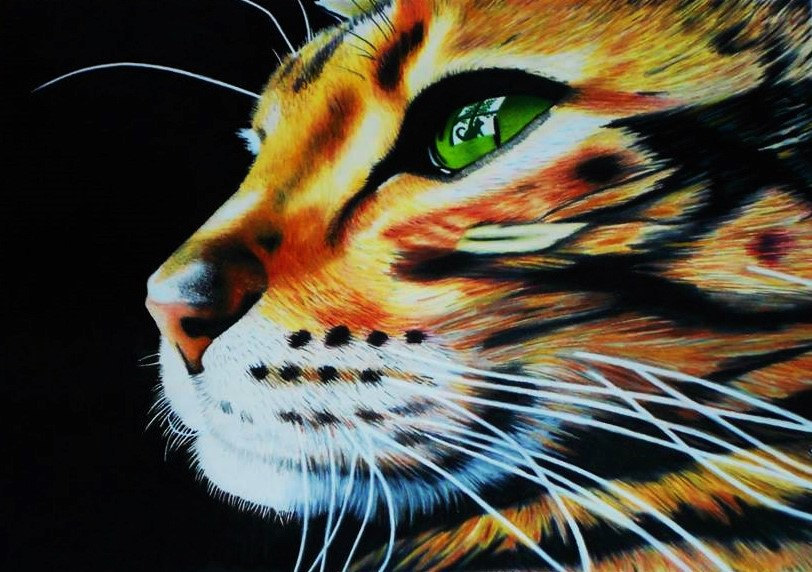 Steve Keiper Jr Creates Super Cat Portraits