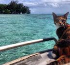 Amelia on board - A Ship's Cat